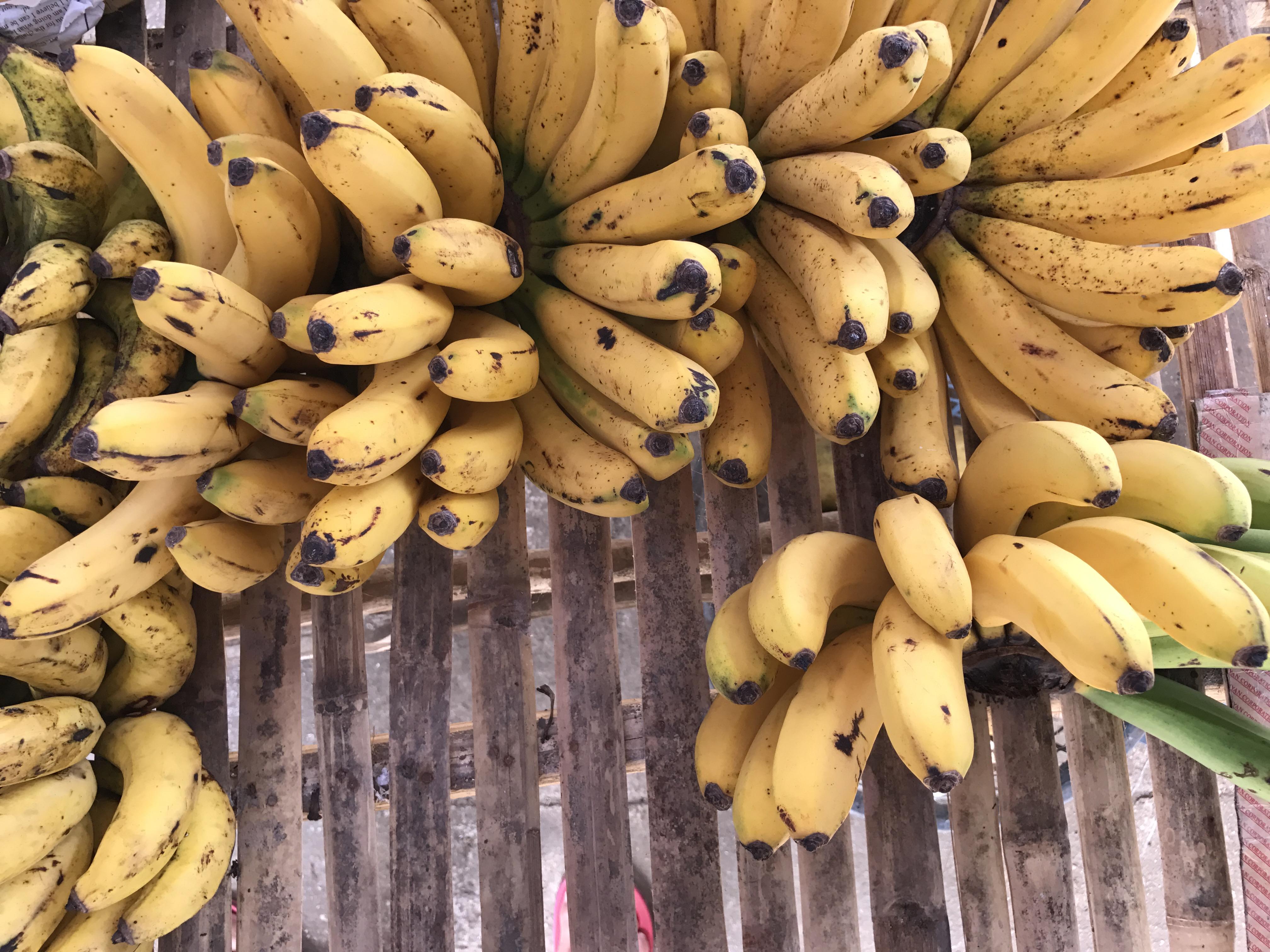 bananas_philippines