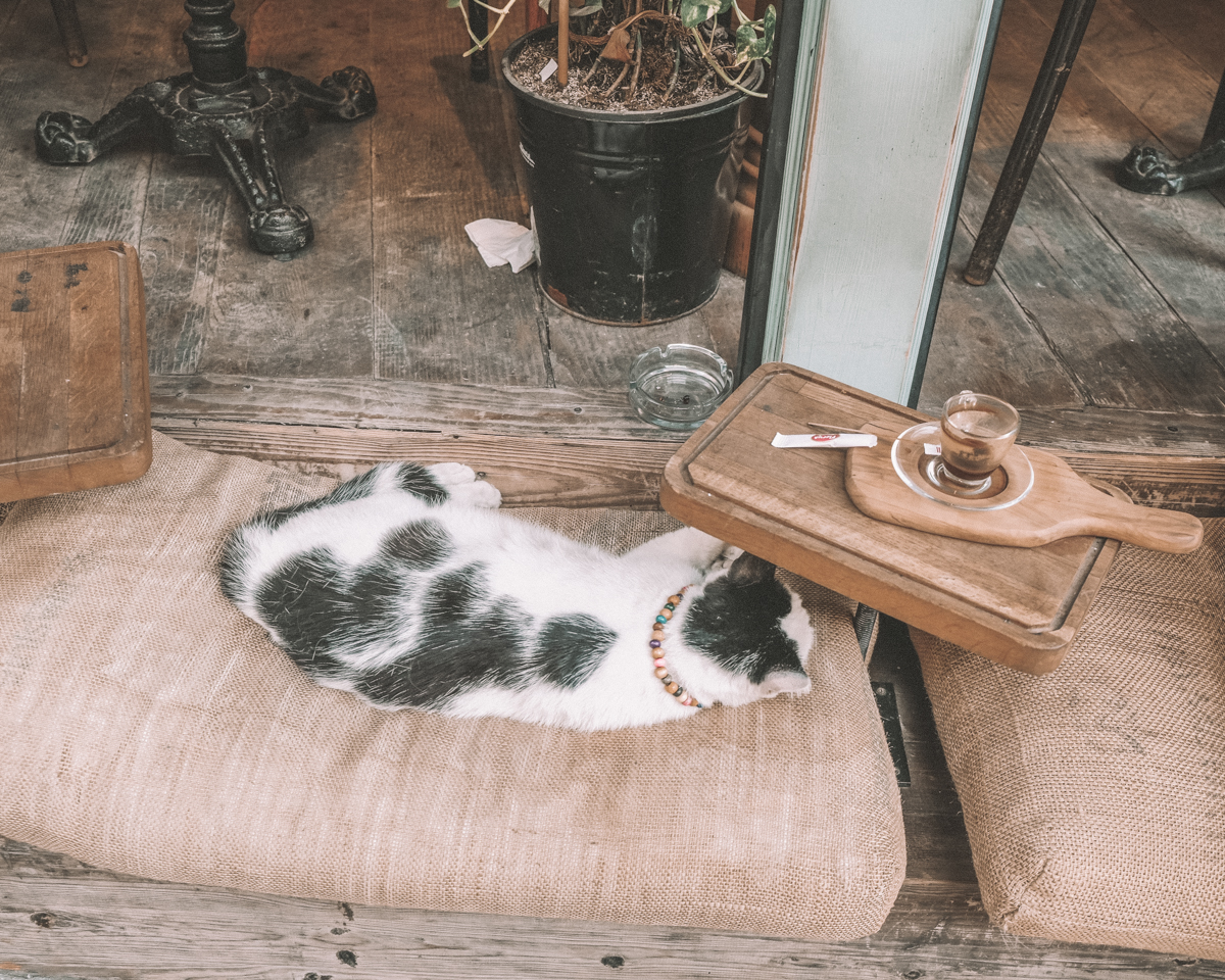 istanbul_cat_sleeping
