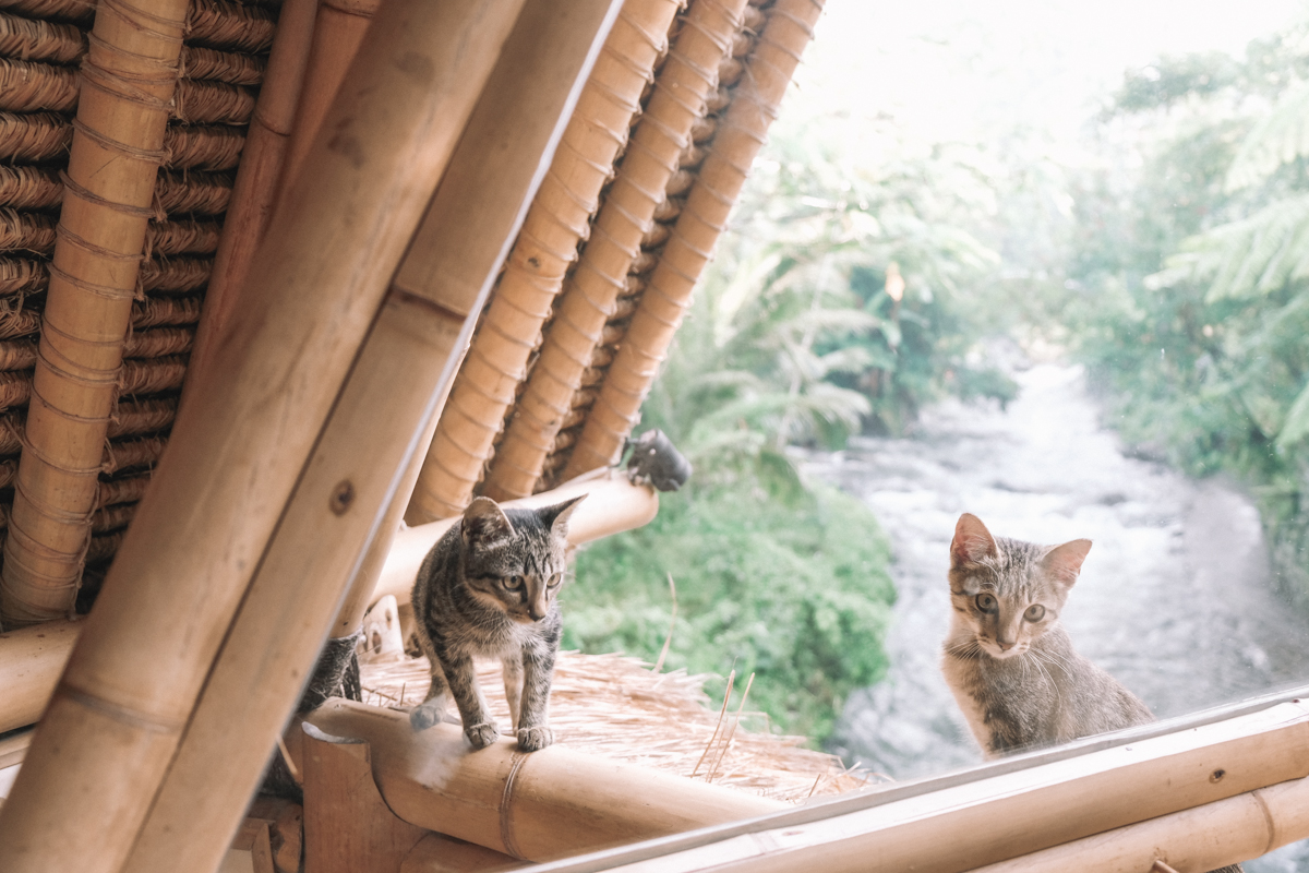 cat_play_hideout_bali