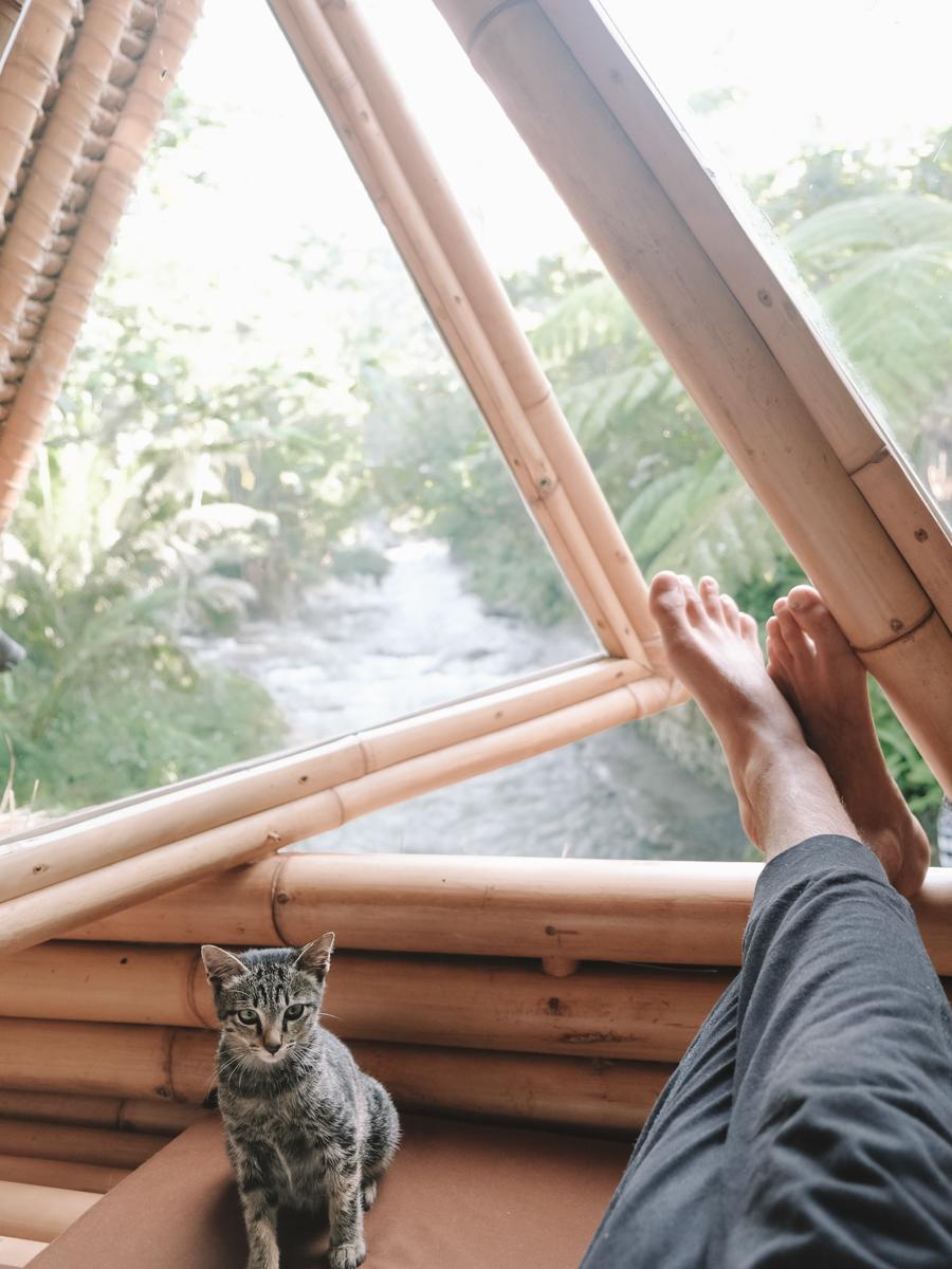 hideout_livingroom_cat