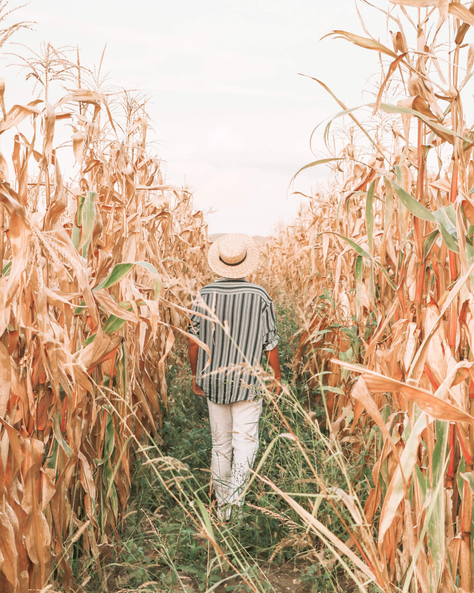 corn_fields_oprtalj