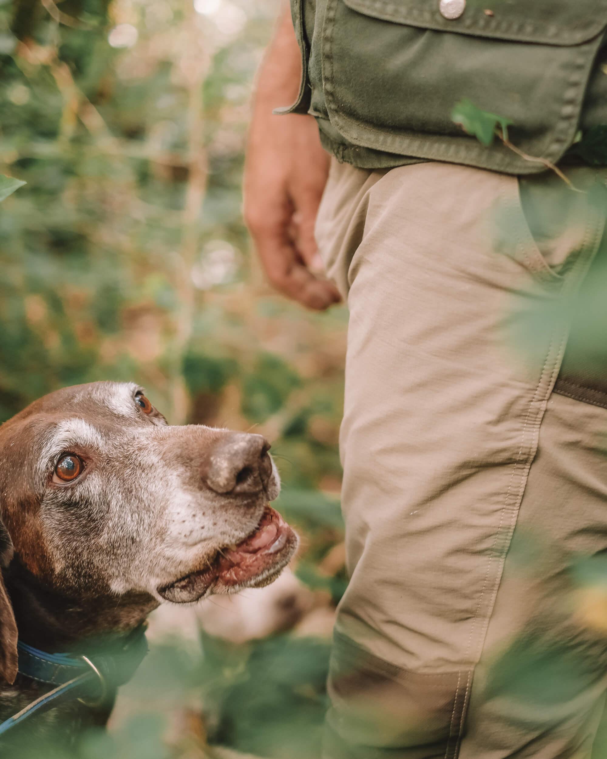 Istria_truffle_hunting